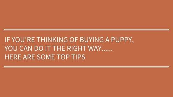 thinking-of-buying-a-new-puppy