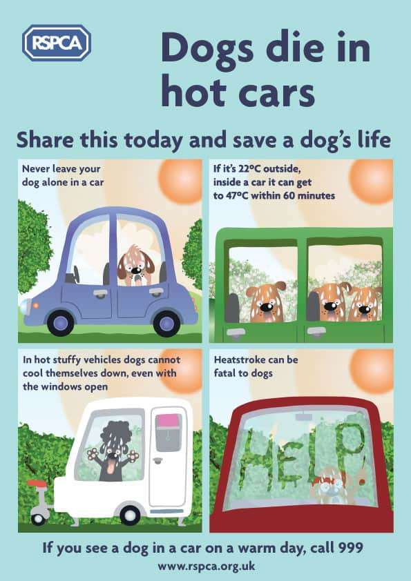 infographic on preventing dogs dying in hot cars