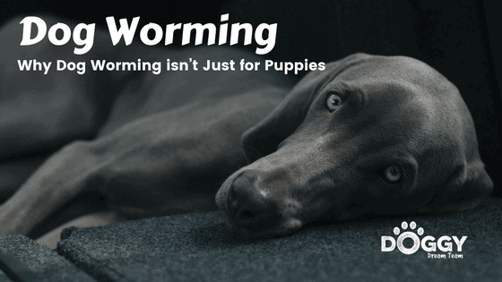 Dog Worming promotional image