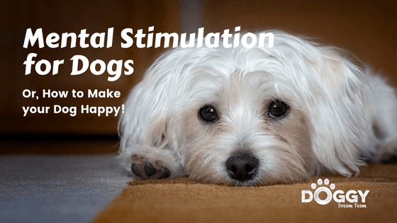 How to give Mental stimulation to dogs