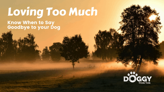 loving too much. saying goodbye to your dog article headline