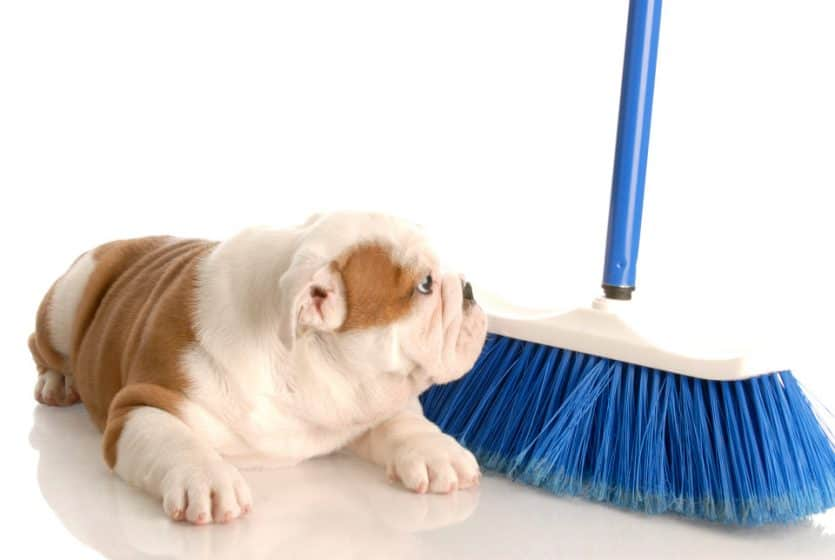 cleaning up after the dog
