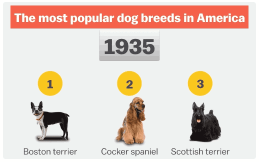 Top 5 most popular dog breeds in america since 1935 infographic