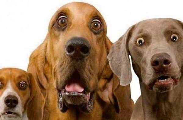 3 surprised dogs from fireworks