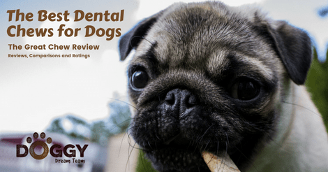 best dental dog chew review article header