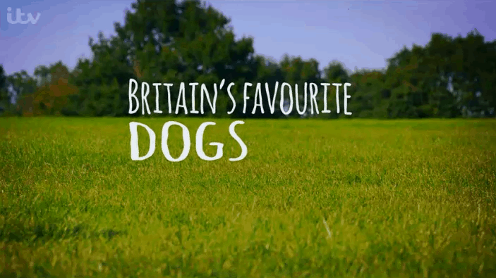 britains-favourite-dogs-2016