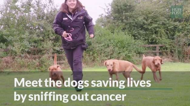 cancer-sniffing-dogs