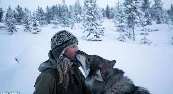 finnish girl lives with wild huskies