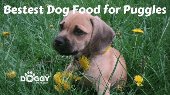 Bestest dog food for puggles header image