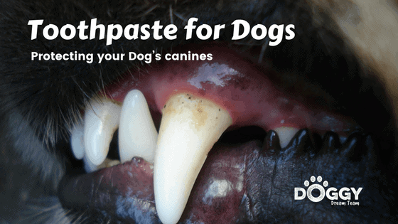 Dogs toothpaste for dog's dirt canine teeth