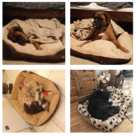customer images- best large dog beds