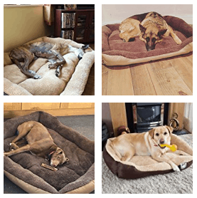 customer images- large-dog beds-2