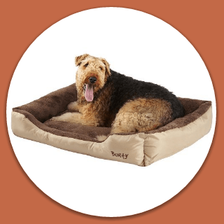 best bed for large dogs hero image