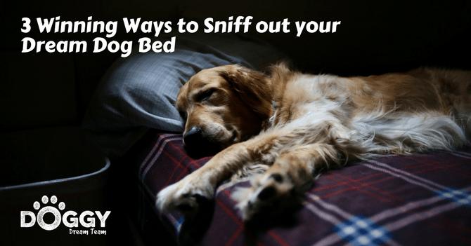Golden retriever on dream dog bed
