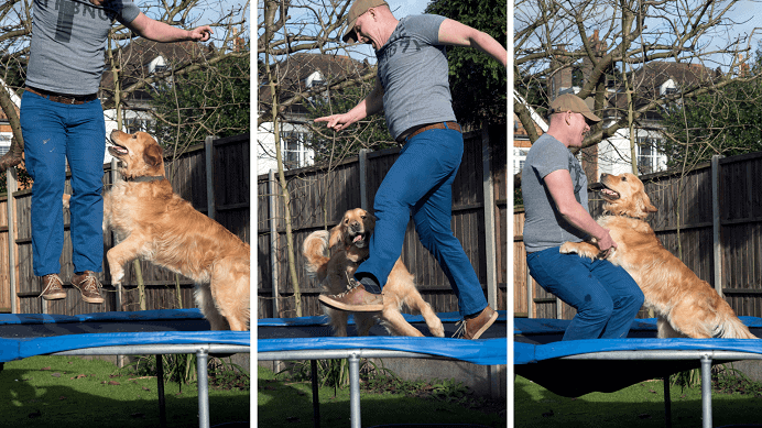 dog sitter and dog on trampoline