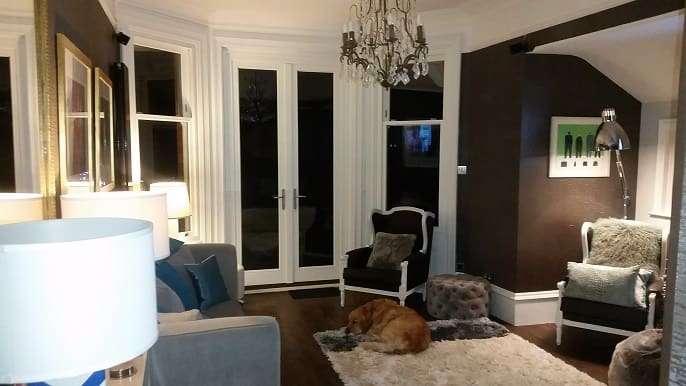 dog sitting in lounge