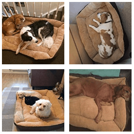 small dog beds - customer images-2