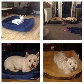 small dog beds - customer images-3.png