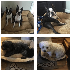 small dog beds - customer images