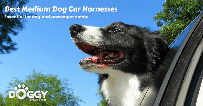 medium dog in a car with no harness