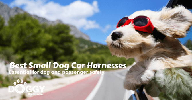 small dog in car without a small harness