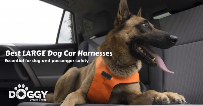 Best Large Dog Car Harnesses hero image
