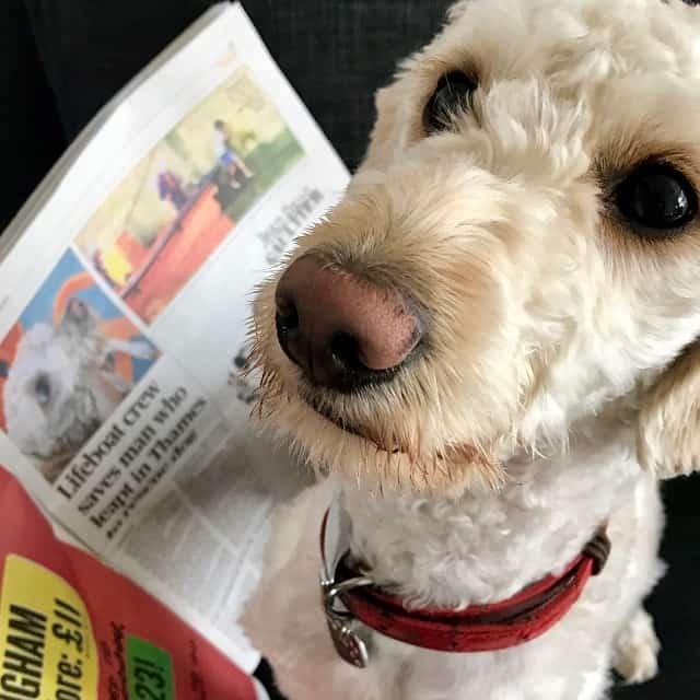 watson reading paper-small