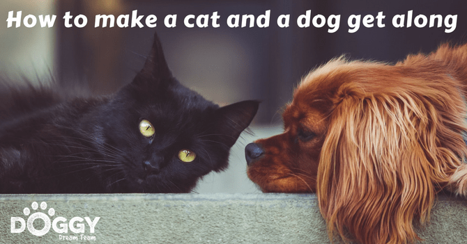 How to make a cat and a dog get along