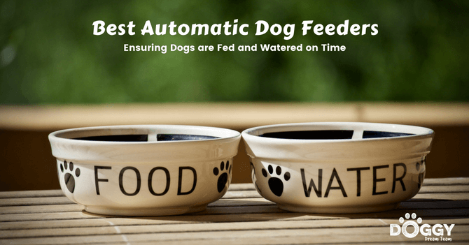 best-automatic-dog feeder-hero-image