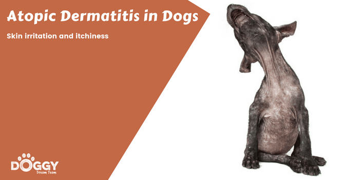 Atopic Dermatitis in Dogs hero image