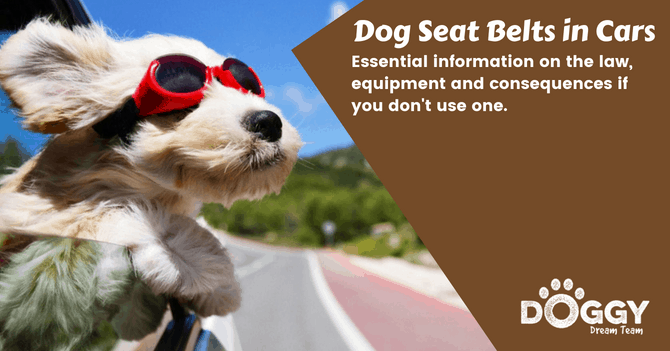 Dog seat belts hero image