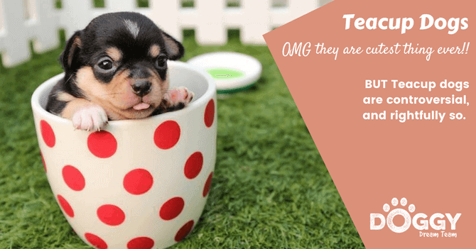 teacup dogs hero image