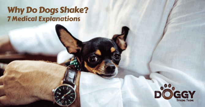 7 Medical Explanations of 'Why Do Dogs Shake?' Focusing on