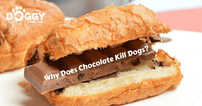 Why Does Chocolate Kill Dogs hero image