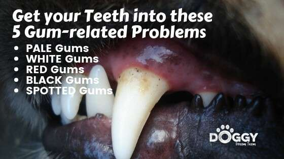 gum related problems hero image-1