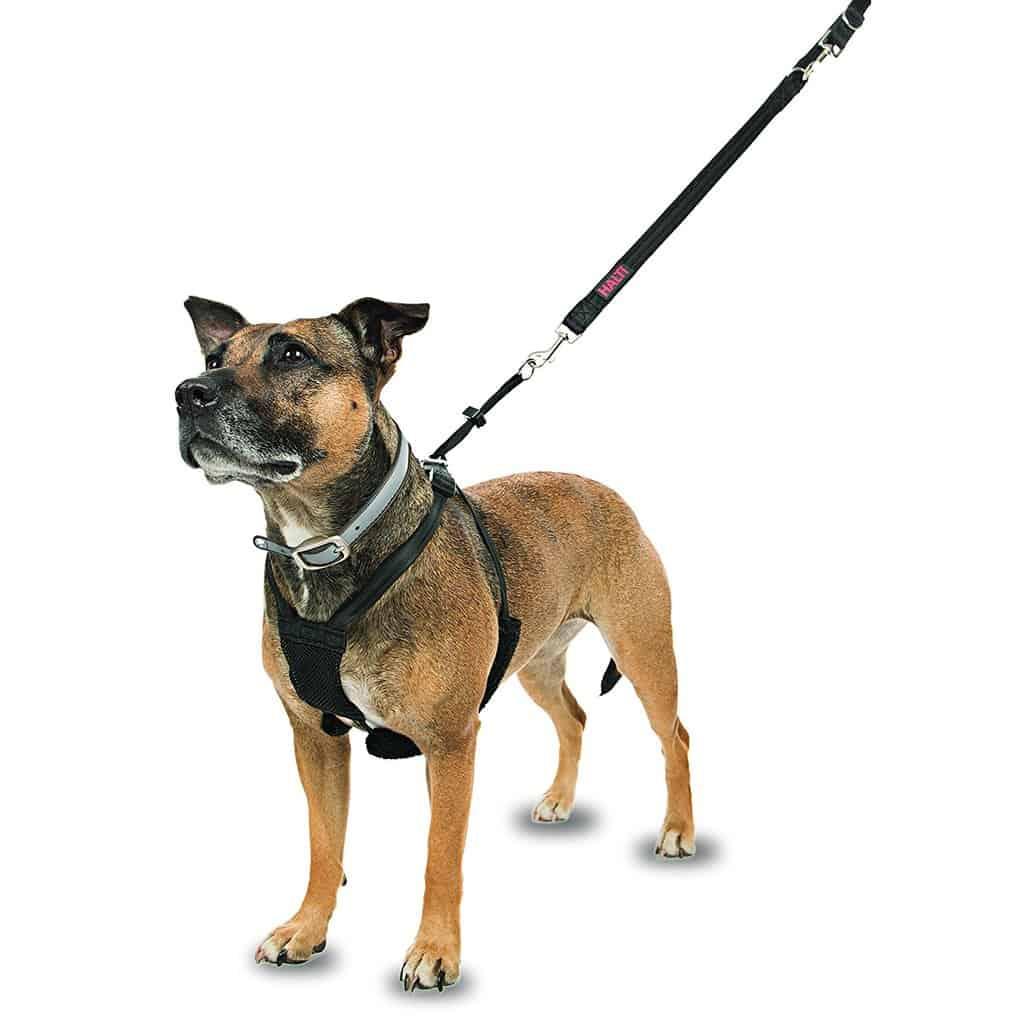 Company dog harness