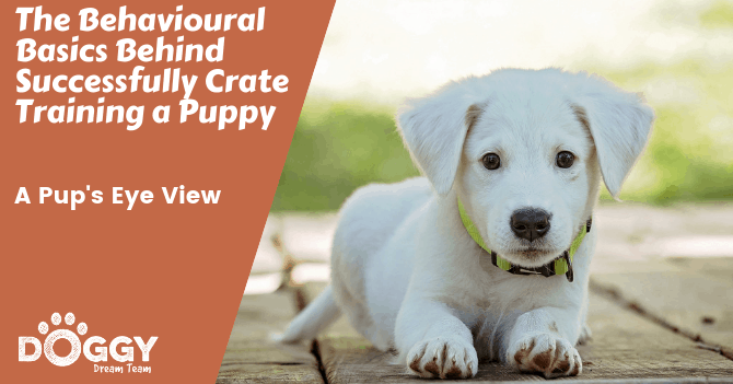 crate training a white puppy