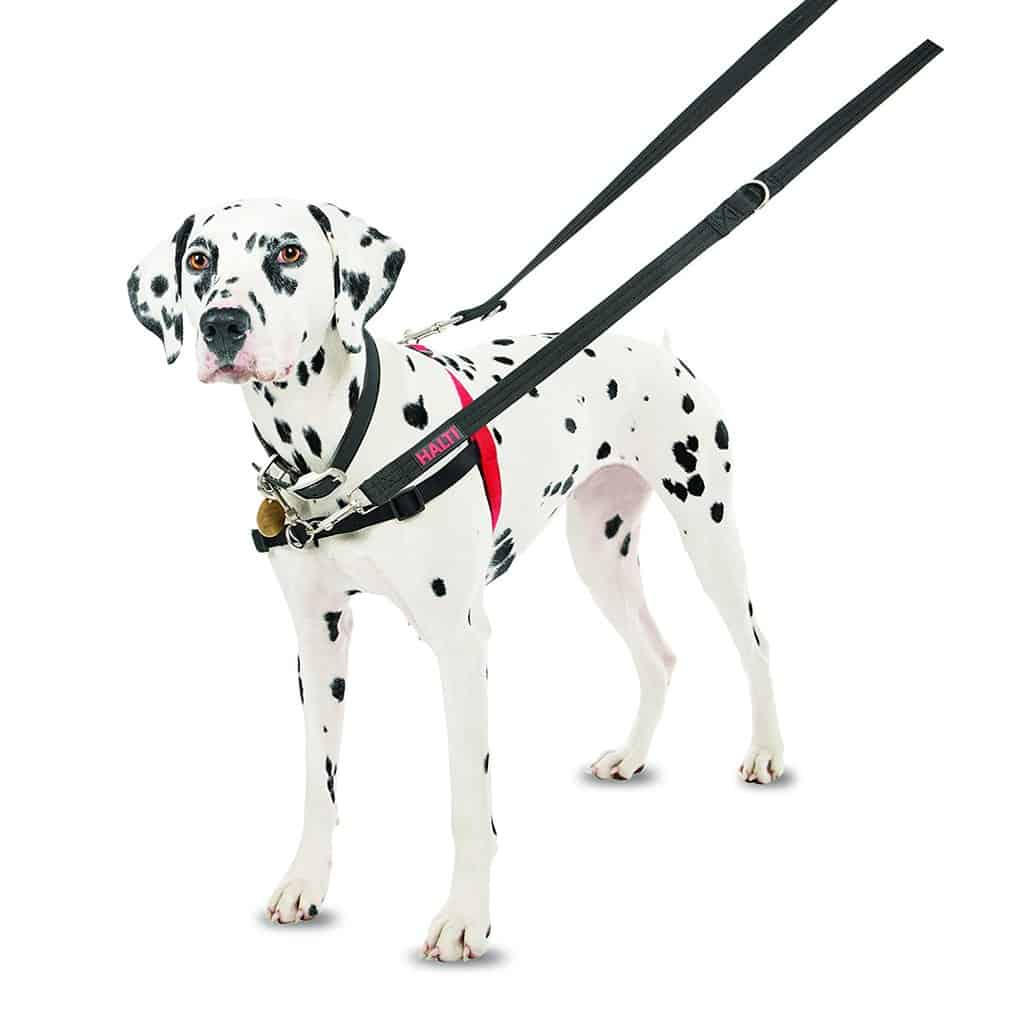 halti dog harness
