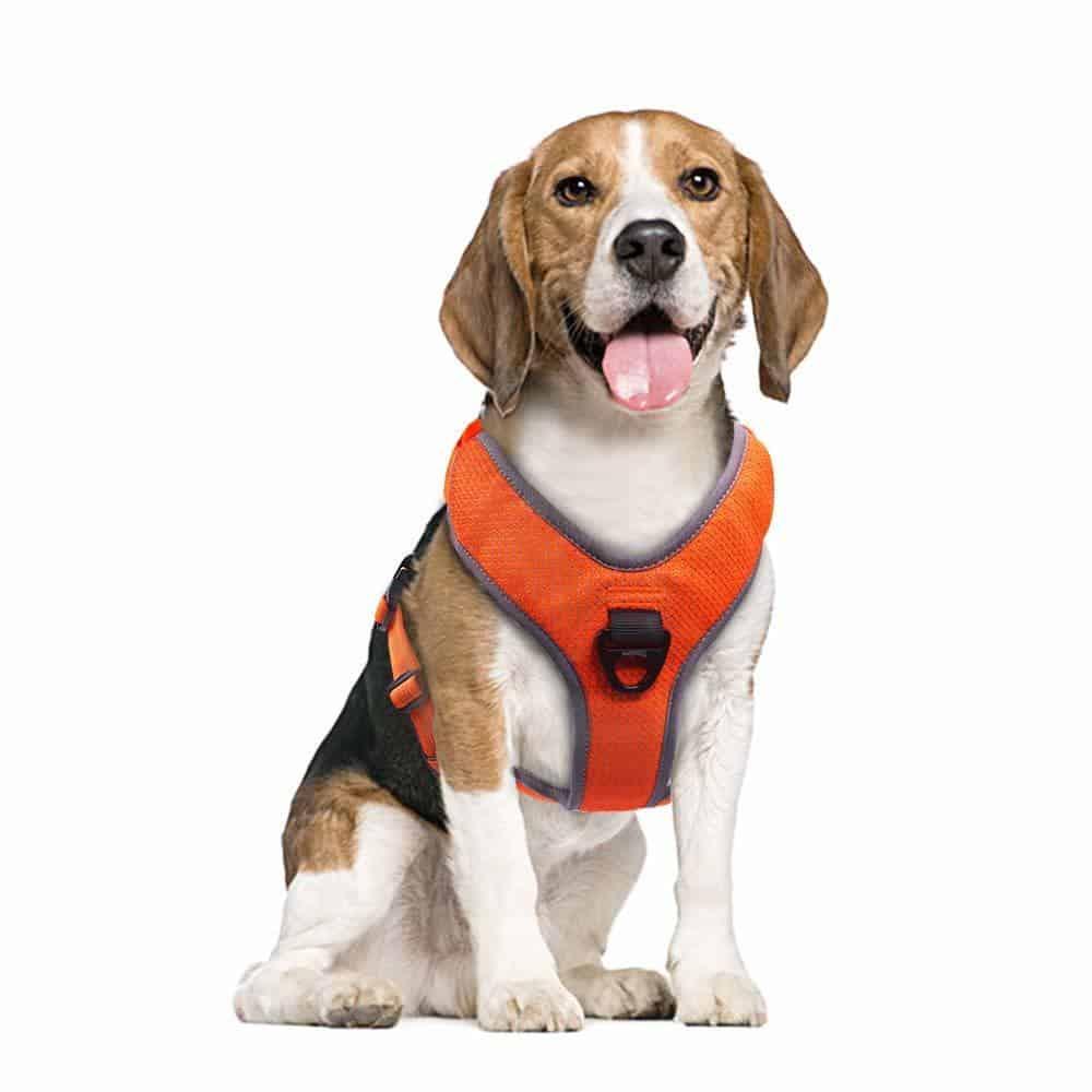 raffaelo dog harness