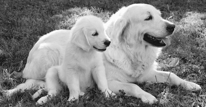 puppy with her mother