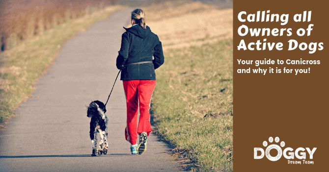lady and dog doing canicross running hero image