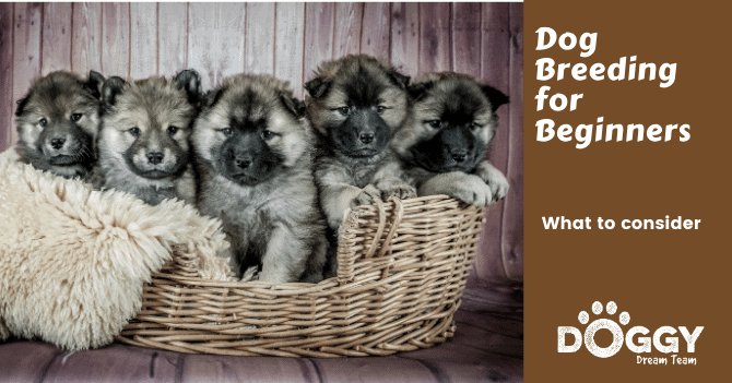 dog breeding for beginners hero image