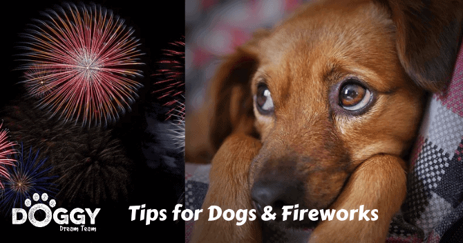 dogs and fireworks hero image. Showing a dog reacting to a firework display.