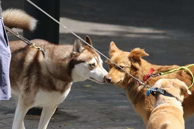 dogs smelling each others unique scent - resembling the featured image of 'why does my dogs breath smell like fish?'