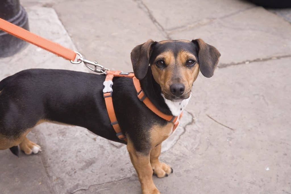 best anti-pull dog harness