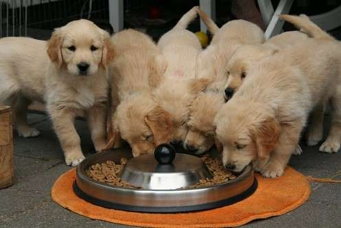 bets dry puppy food of 2021