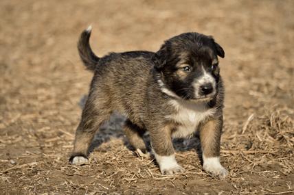 teach a puppy recall