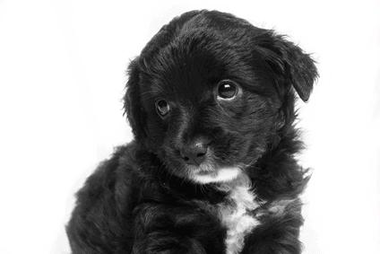 how to teach a puppy no