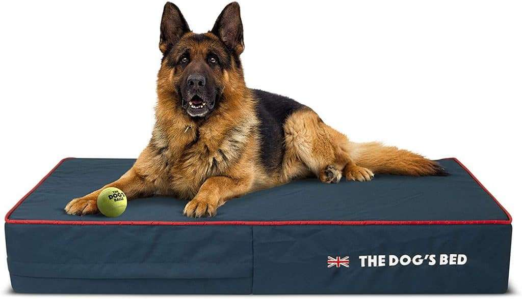 the dogs bed orthopaedic dog bed