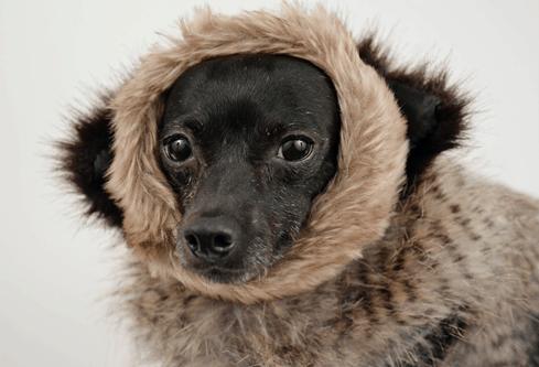 best waterproof dog coats uk